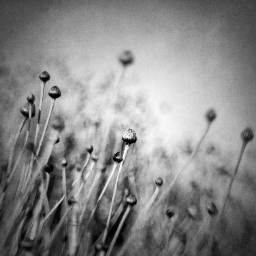 A piece of fine art art photography titled Blossom Expectation by Vangelis Bagiatis