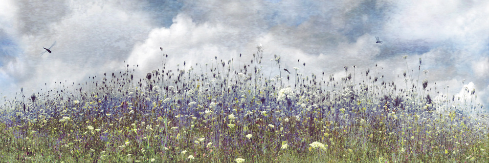 A piece of fine art art photography titled Wildflower Storm by BethAnne Lutz