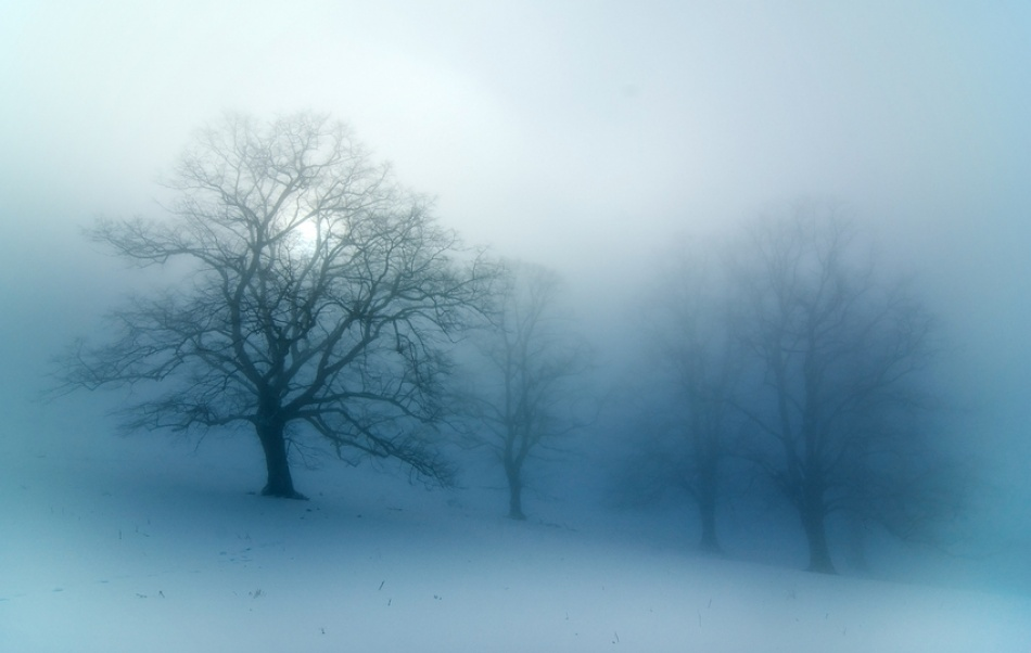 A piece of fine art art photography titled Limetree In Fog by kregon