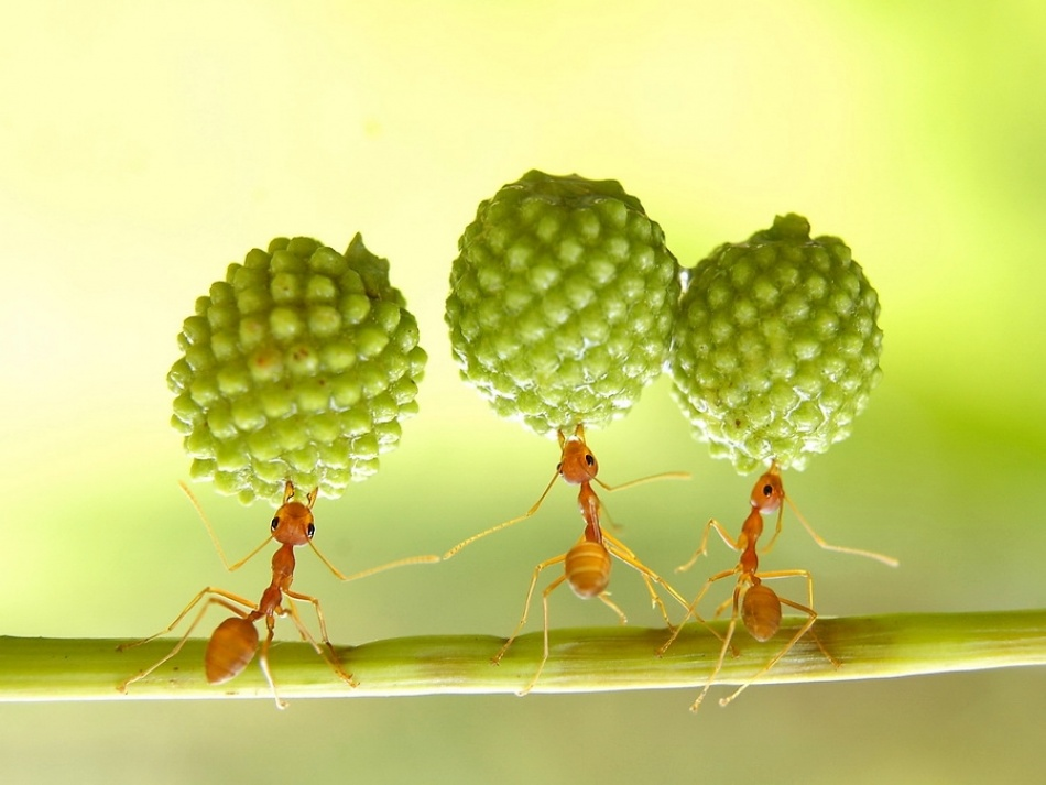 A piece of fine art art photography titled Super Ant by Eko Adiyanto