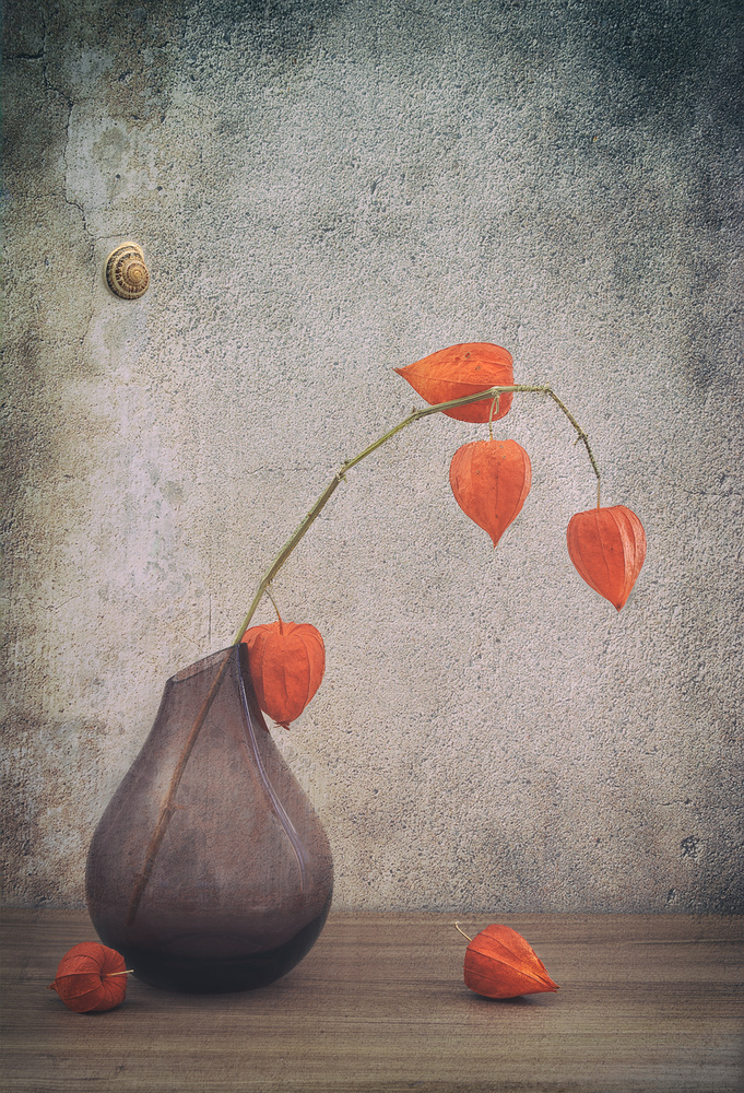 A piece of fine art art photography titled Physalis by Sophie Pan