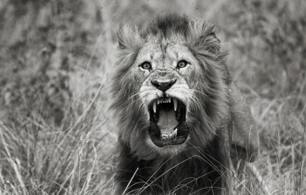 A piece of fine art art photography titled Roar by mistak