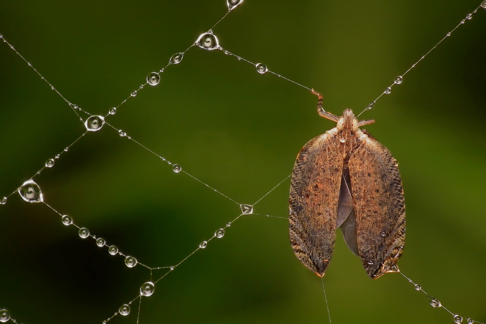 A piece of fine art art photography titled Trapped by Novrianto irmawan
