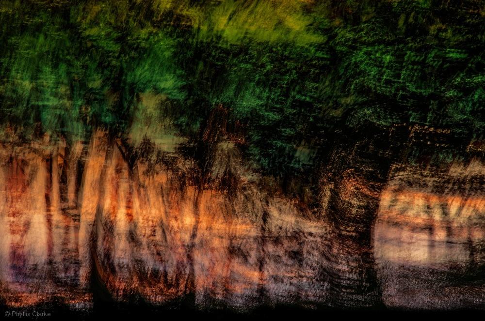 Forest At Sundown