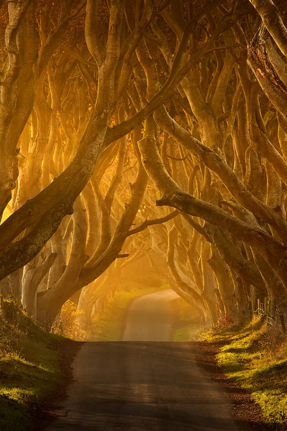 A piece of fine art art photography titled The Dark Hedges by Pawel Klarecki