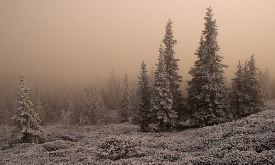 A piece of fine art art photography titled Spruce Forest by Mika Sjöman