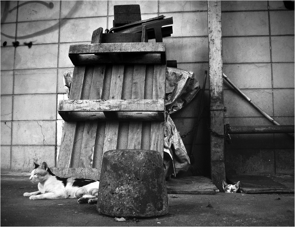 A piece of fine art art photography titled The Stray Cats by Koen Pieters