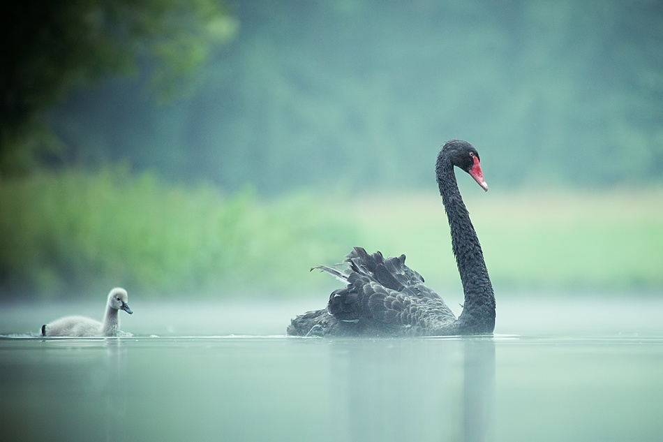 A piece of fine art art photography titled In the Morning Mist by Robert Adamec