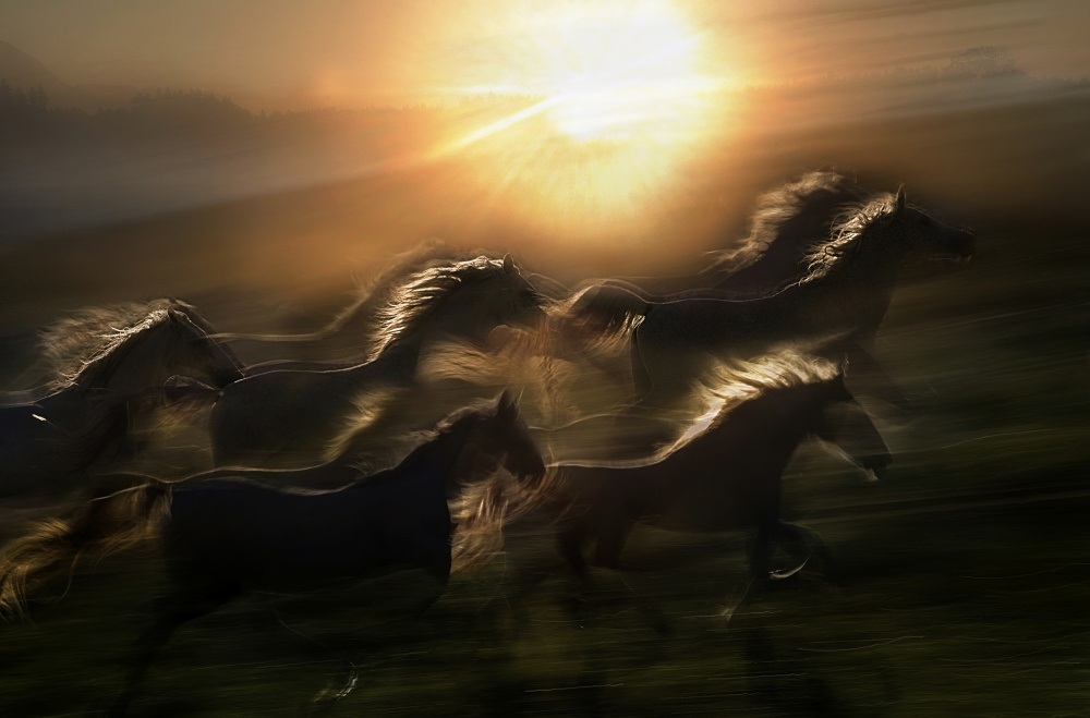 A piece of fine art art photography titled Morning  Gallop by milan malovrh