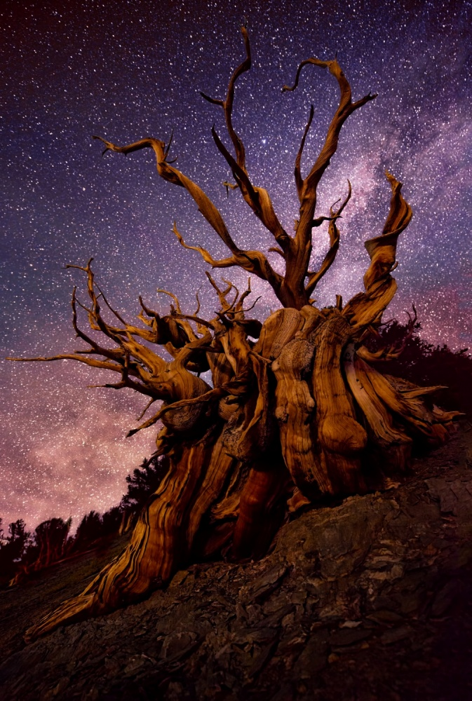 A piece of fine art art photography titled Mountain Sentinel by Doug Solis