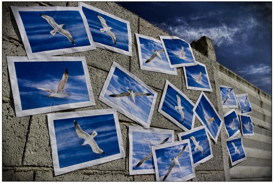 A flight of gulls