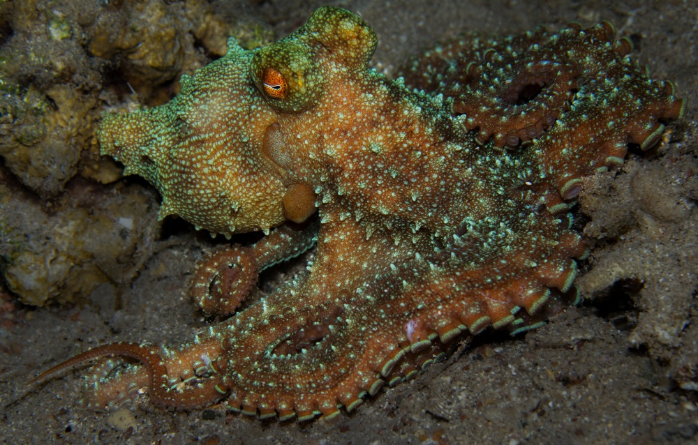 A piece of fine art art photography titled Octopus by Anna Shvab