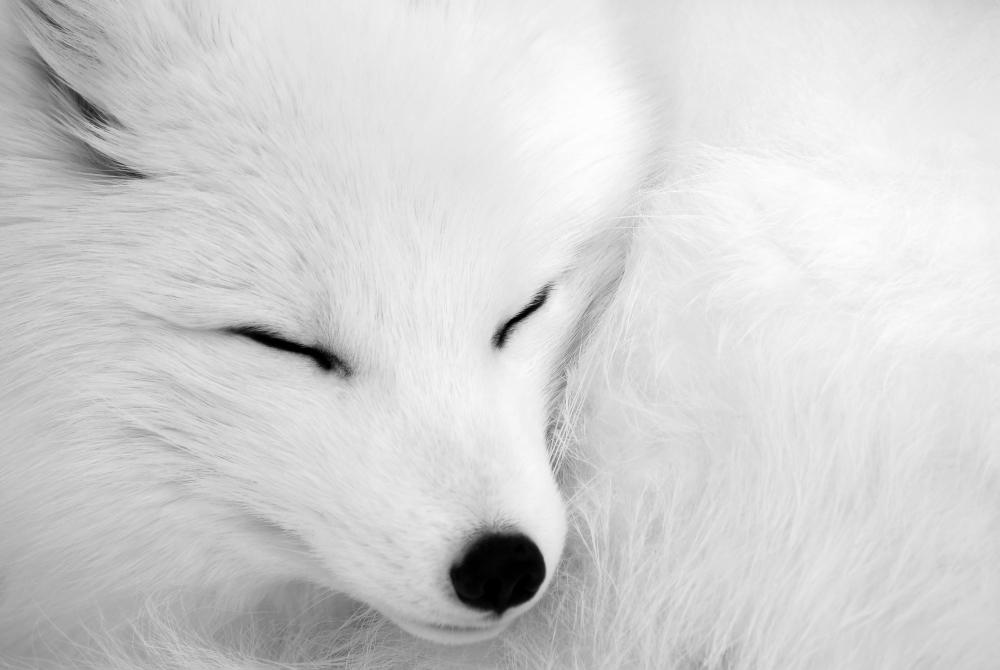 A piece of fine art art photography titled Asleep by Alain Turgeon