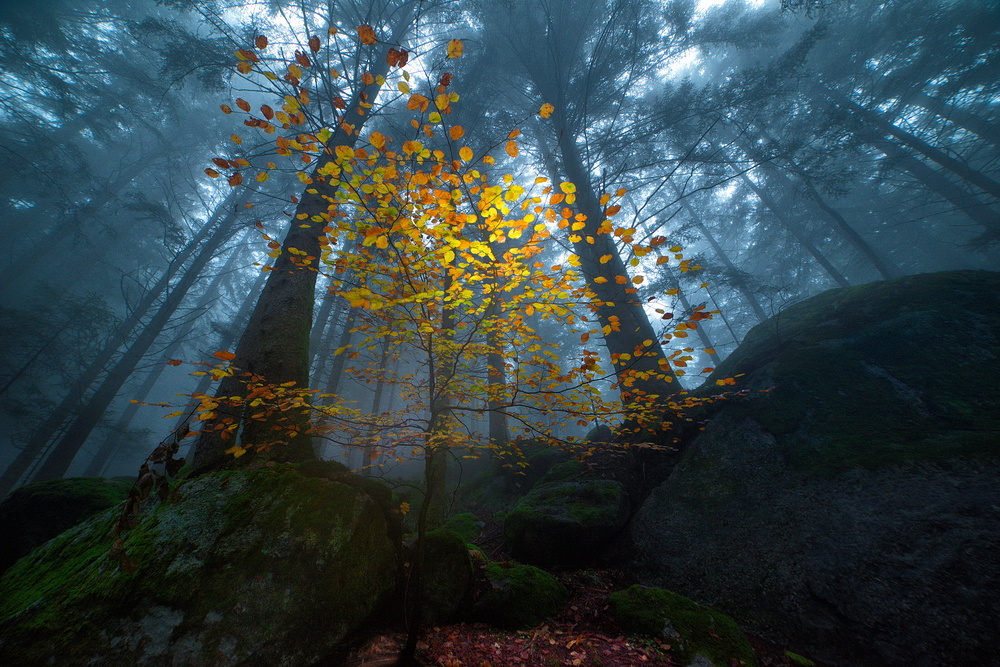 View this piece of fine art photography titled The young beech by Marco Moretti