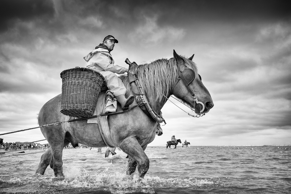 Shrimp Fishing On Horseback