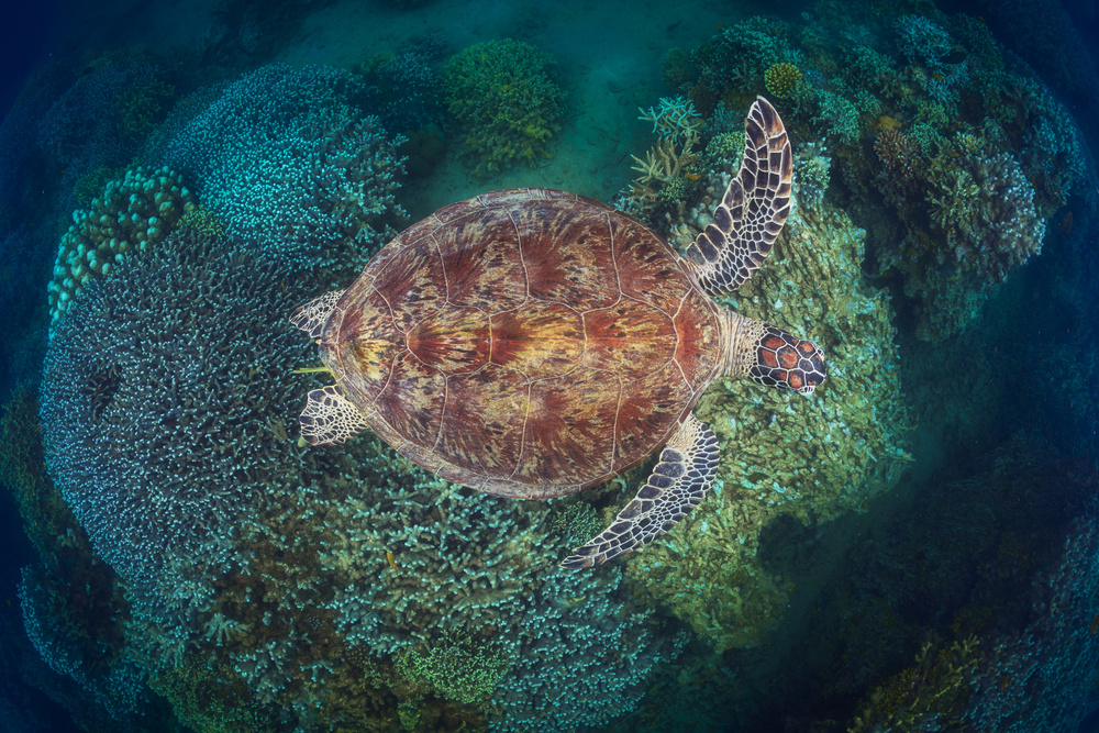 N'Gouja Reef