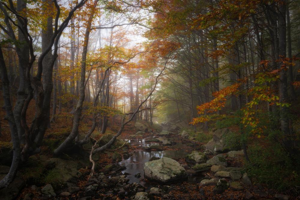 A piece of fine art art photography titled Autumn by Francesco Tavani