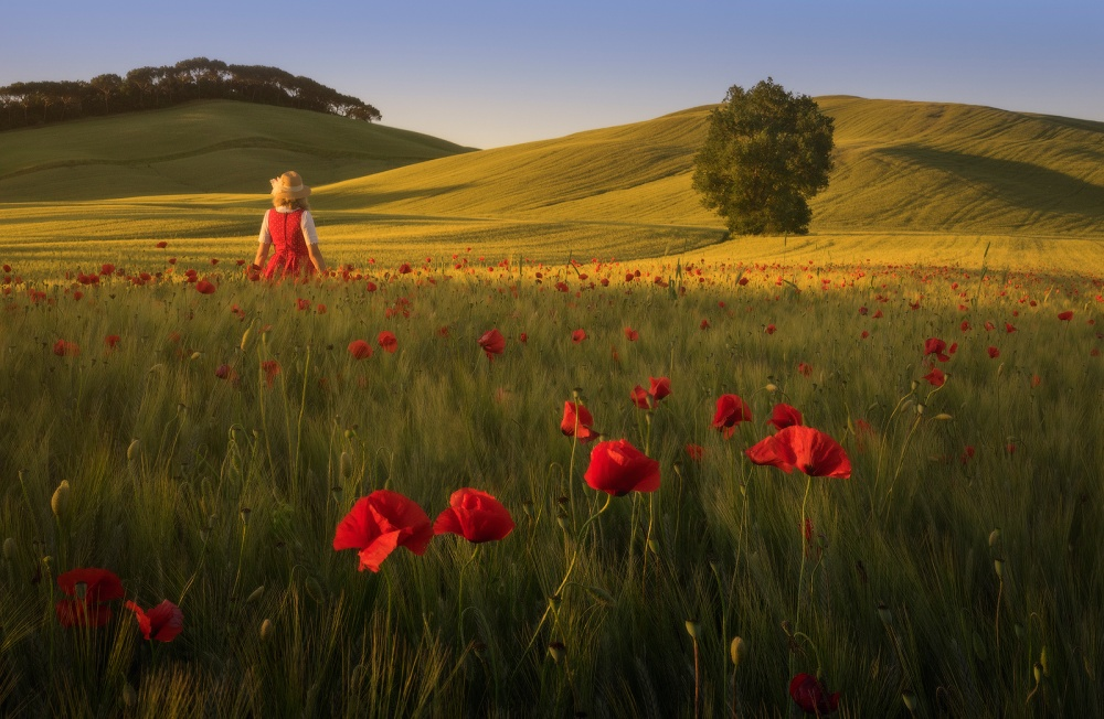 A piece of fine art art photography titled Red Poppies by Daniel Kordan