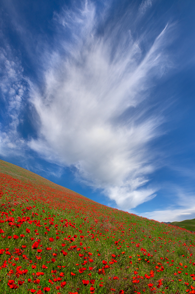 A piece of fine art art photography titled Red Poppies In Tianshan by Hua Zhu