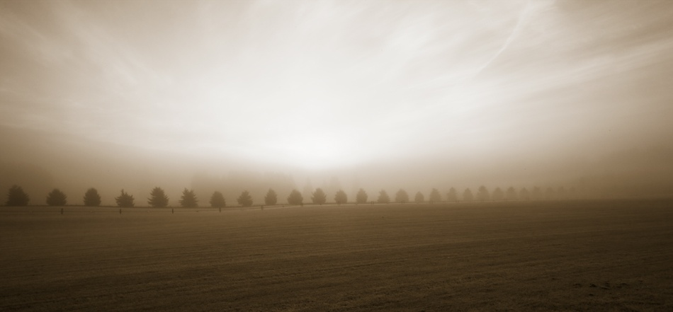 A piece of fine art art photography titled Trees In the Morning Mist by Ghyslain Heurtel