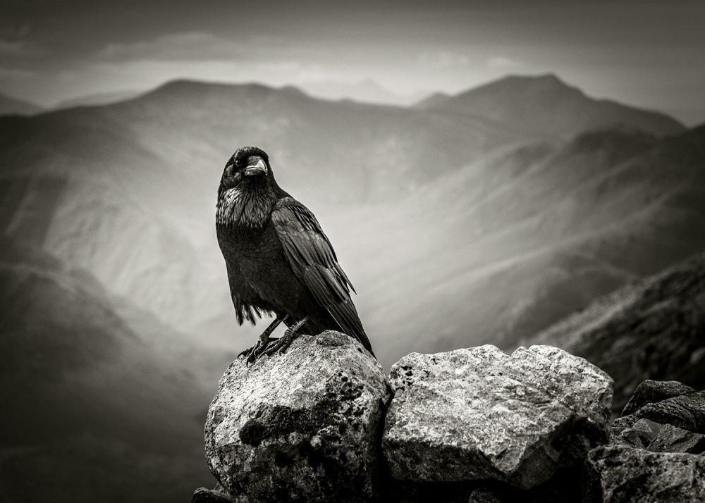 A piece of fine art art photography titled The Raven by Damian Shields