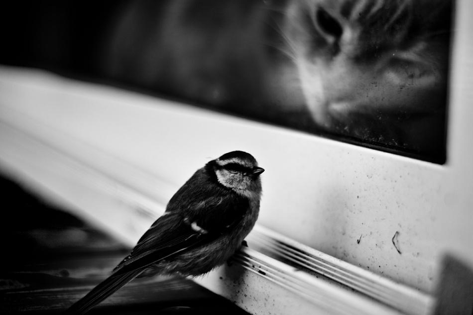A piece of fine art art photography titled Teaser by Johan Lind