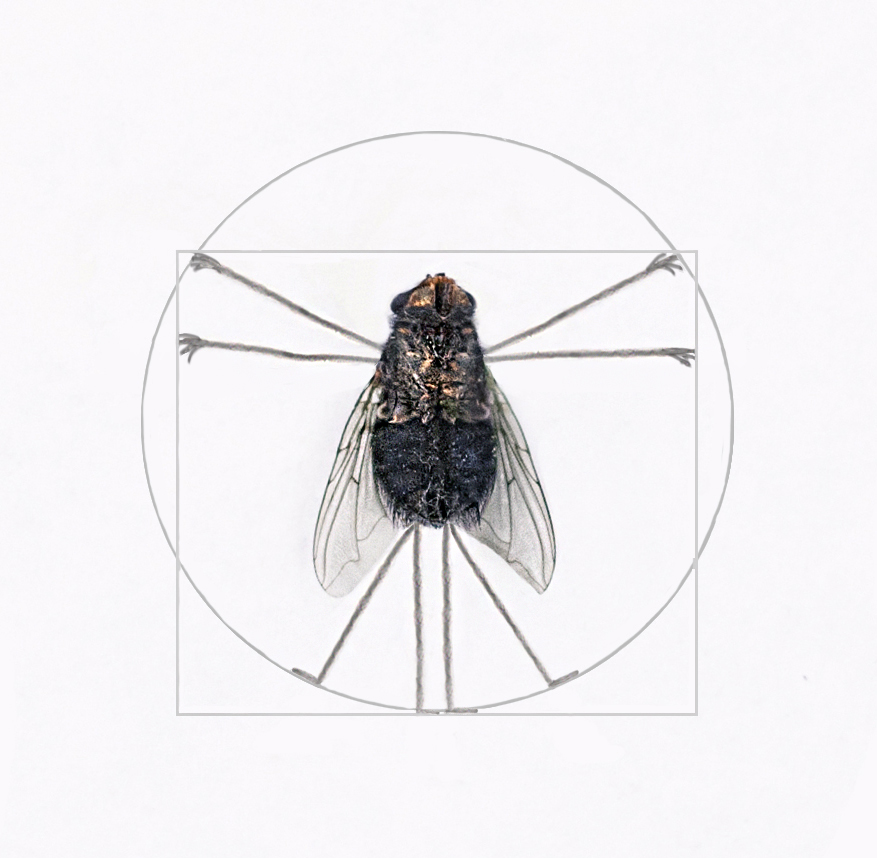 View this piece of fine art photography titled Vitruvian fly by Carlo Ferrara