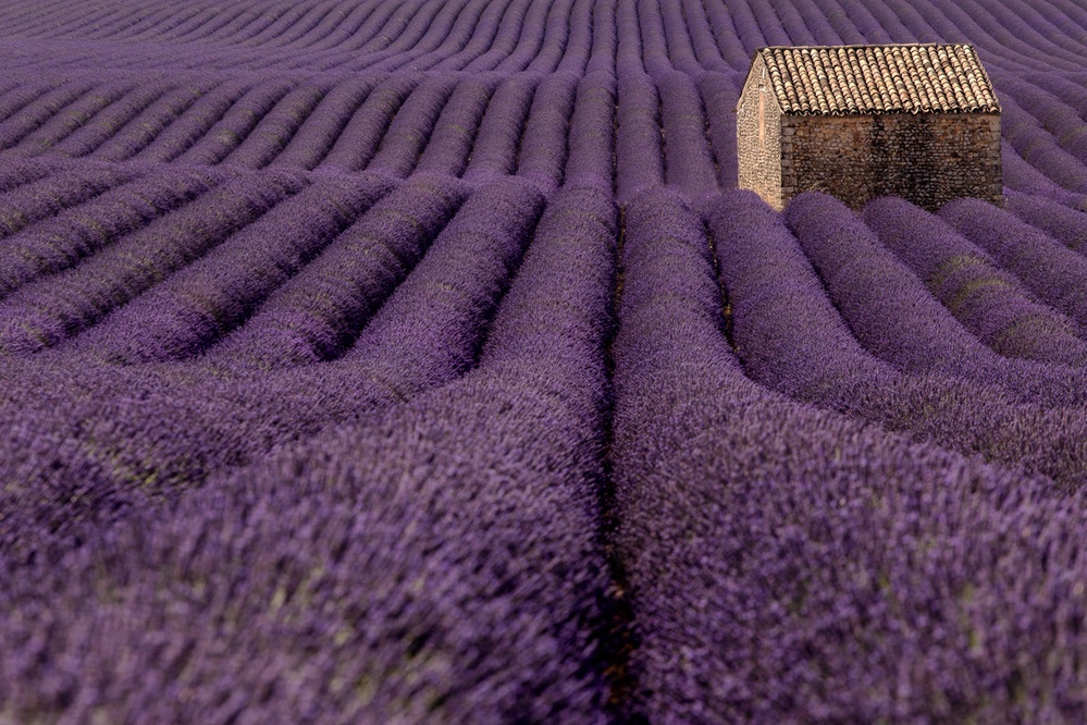 A piece of fine art art photography titled Into the Purple by Stefano Chiarelli
