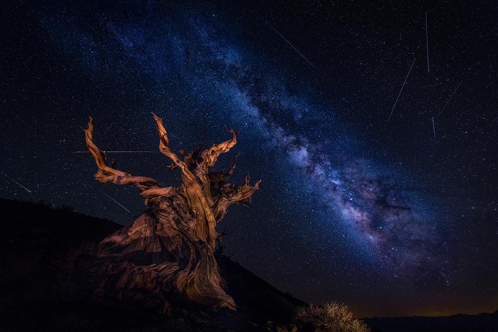 A piece of fine art art photography titled Shooting Stars Night by Michael Zheng