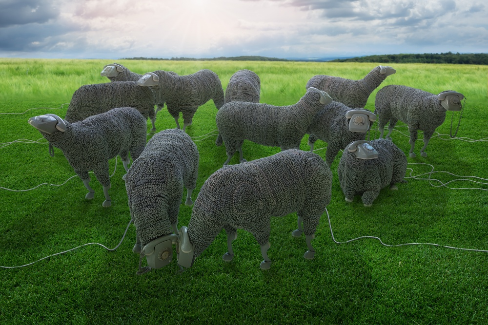 A piece of fine art art photography titled Just Jean Luc Cornec's Sheeps In Freedom by John Wilhelm