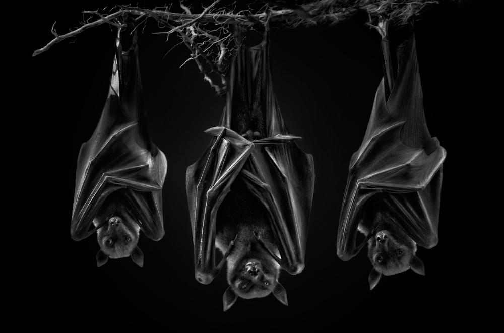 A piece of fine art art photography titled The Sect by Pedro Jarque