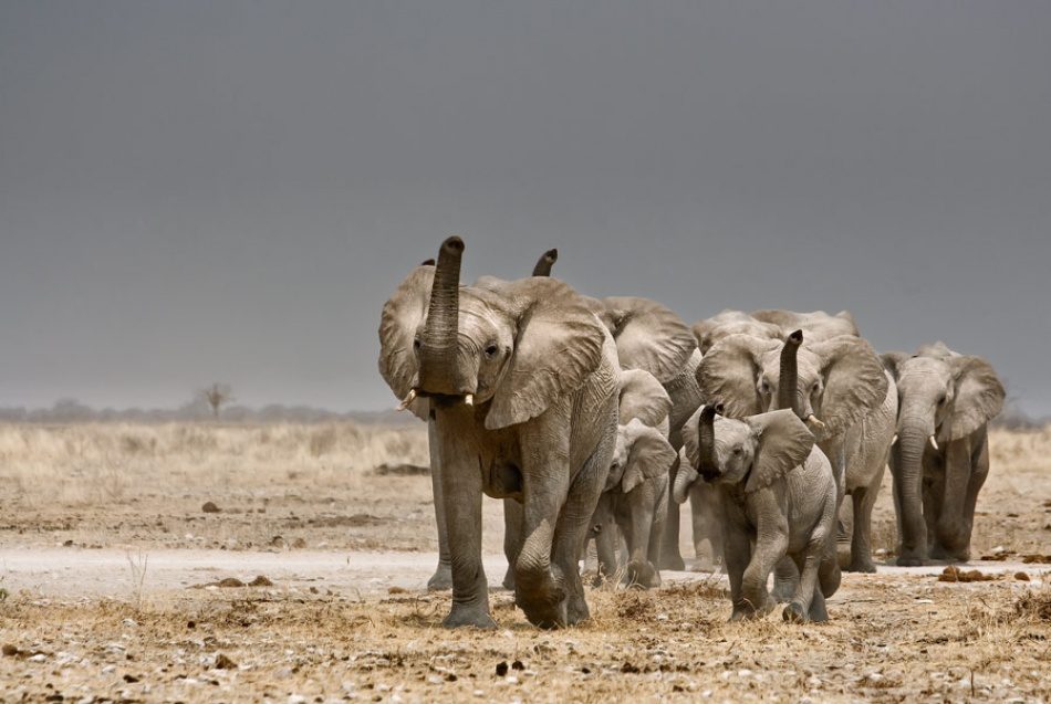 A piece of fine art art photography titled Elephants by Eduard