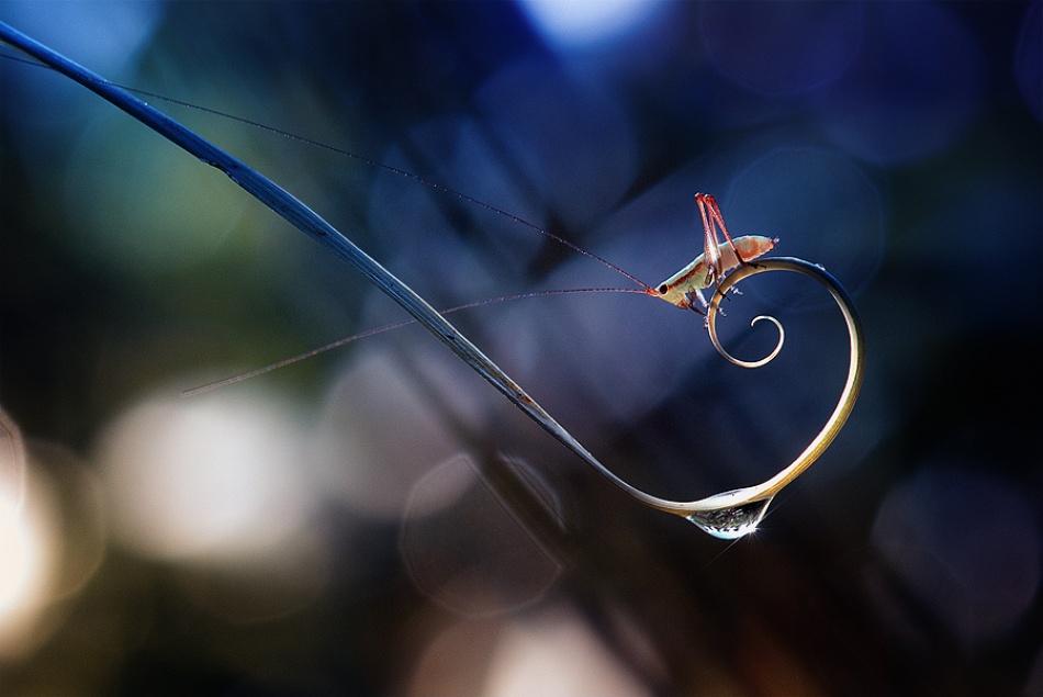 A piece of fine art art photography titled @ & Dew by Nordin Seruyan