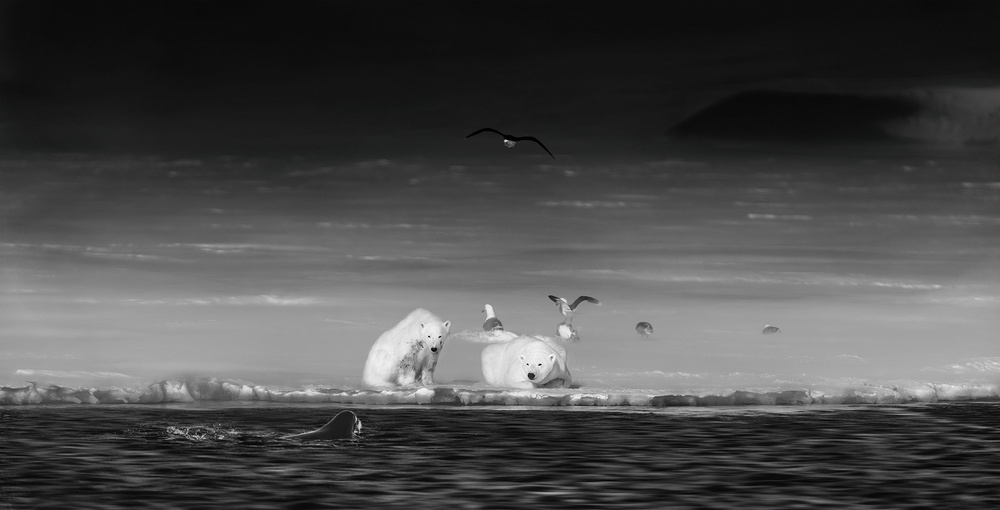 A piece of fine art art photography titled Hunting by Phillip Chang