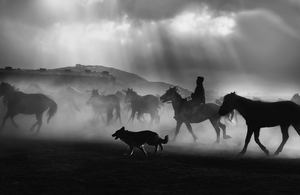 A piece of fine art art photography titled Free Horses by Emine Basa