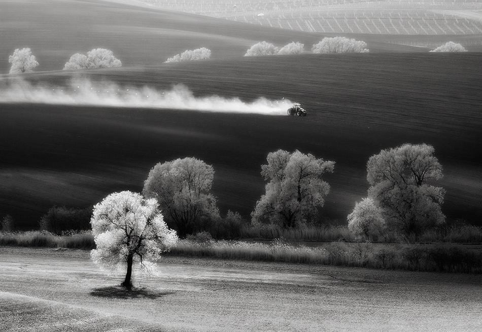 A piece of fine art art photography titled The Tree by fproject - Przemyslaw Kruk