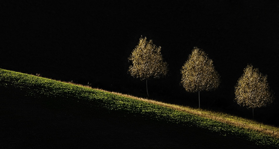 A piece of fine art art photography titled Little Trees by andrea lorenzetti