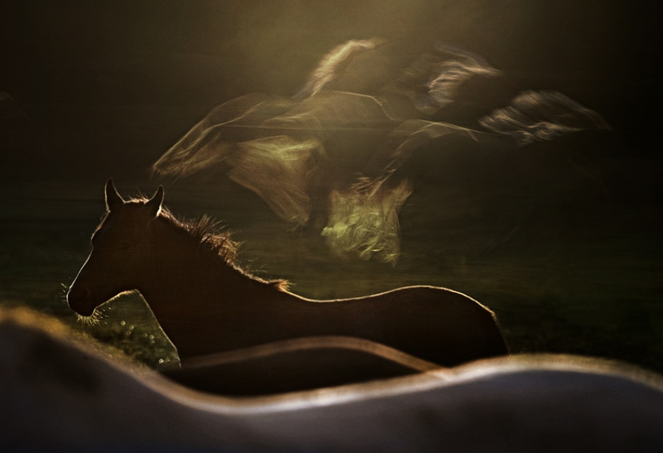 A piece of fine art art photography titled Dream Shine by milan malovrh