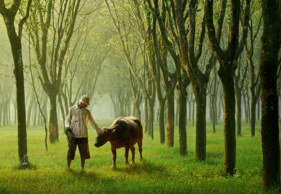 A piece of fine art art photography titled Morning Shepherd by A.madestra. W