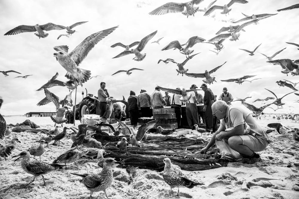 A piece of fine art art photography titled Birds by Liesbeth van der Werf