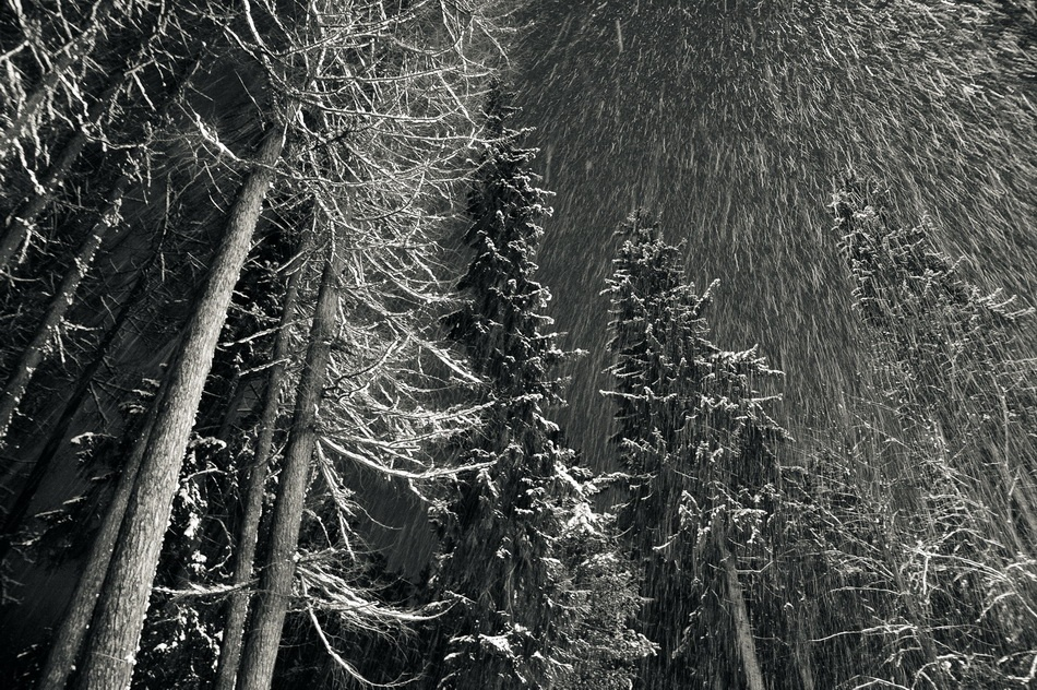 A piece of fine art art photography titled Let There Be Snow by Stefan Badulescu