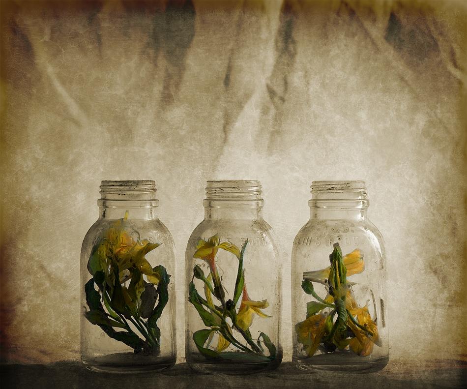 A piece of fine art art photography titled Specimen by ESPhotography