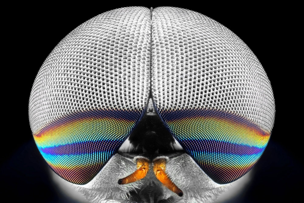A piece of fine art art photography titled Horsefly Portrait by Donald Jusa