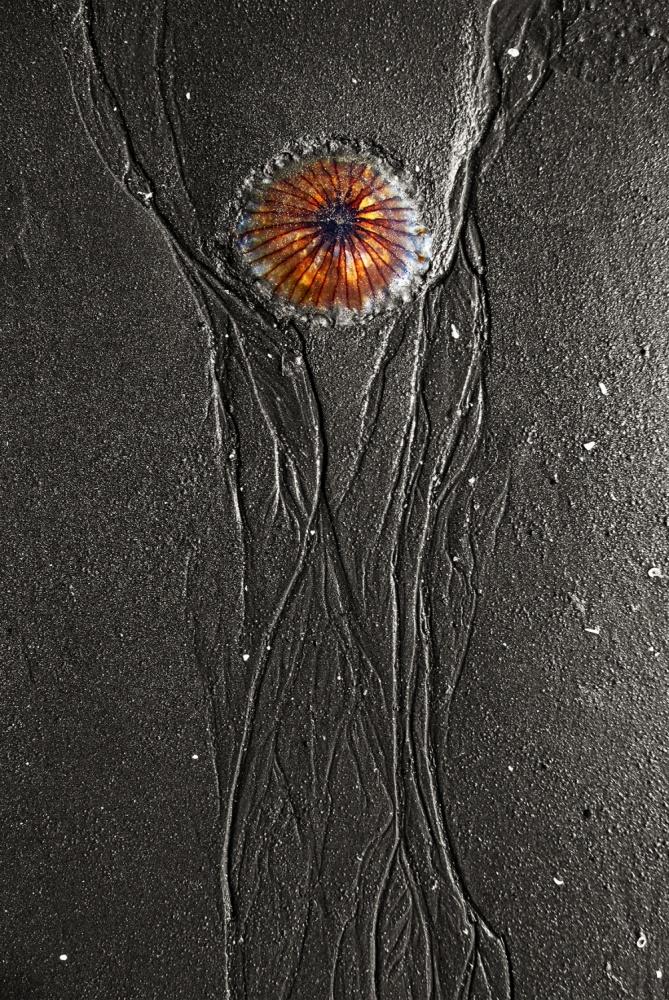A piece of fine art art photography titled Jellyfish #5 by Nakakuki