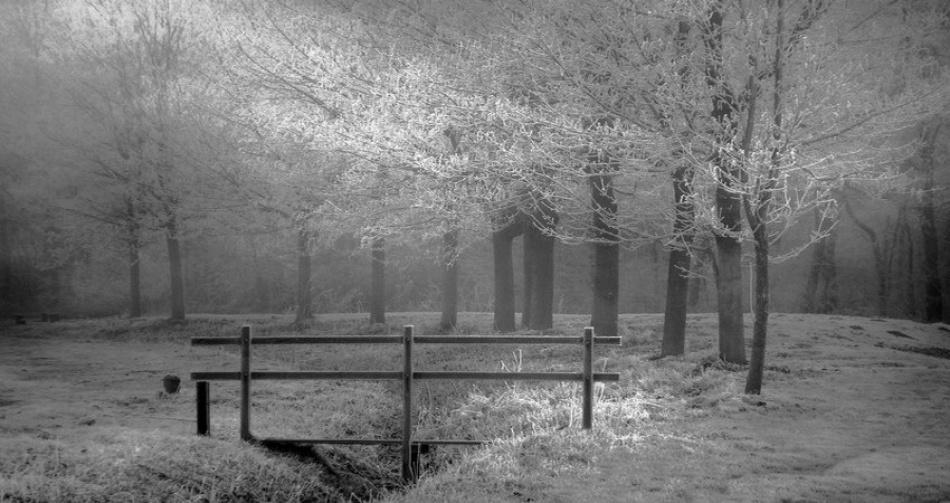 A piece of fine art art photography titled Snow, Misty and Sunlight by Annelies Schreuder