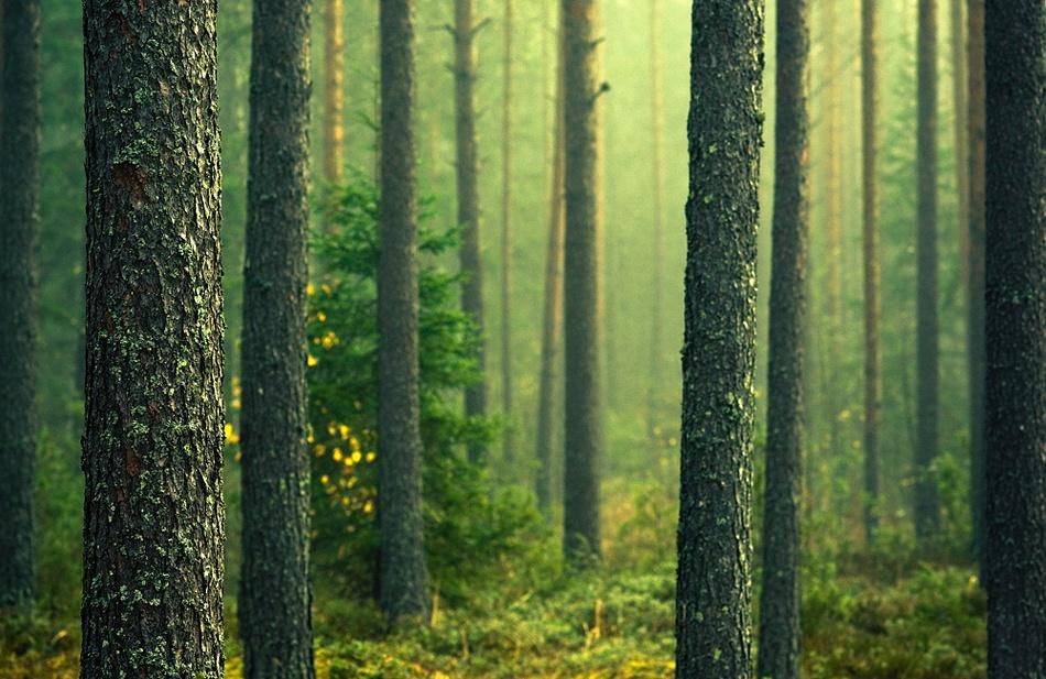 A piece of fine art art photography titled Green Forest by Joni Niemelä