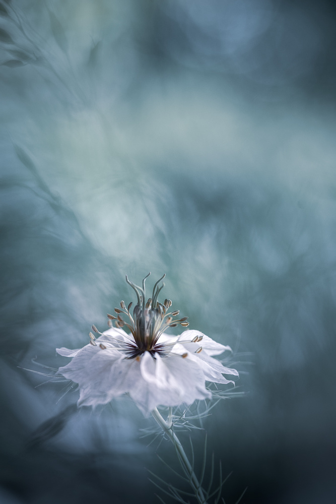 View this piece of fine art photography titled Ballerina by Christl Deckx