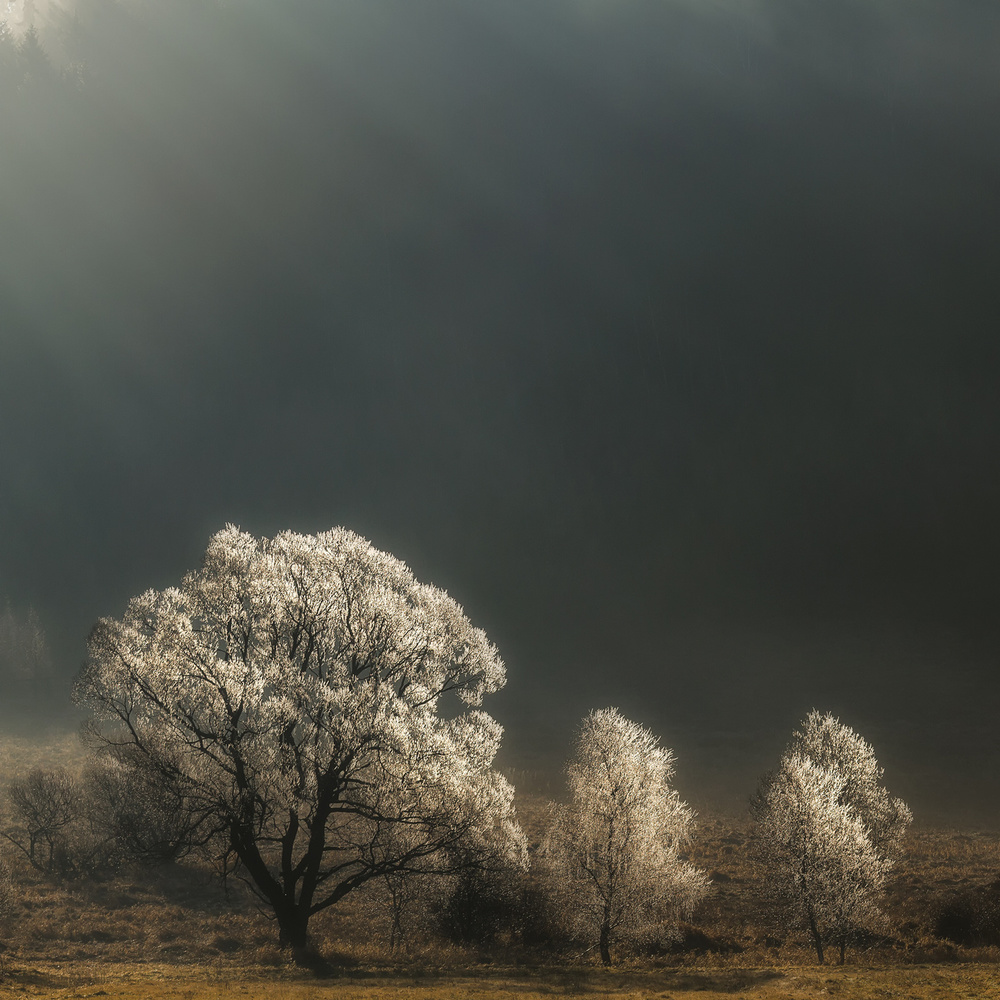A piece of fine art art photography titled Brilliant Trees by Izabela Laszewska-Mitrega/Darek Mitręga