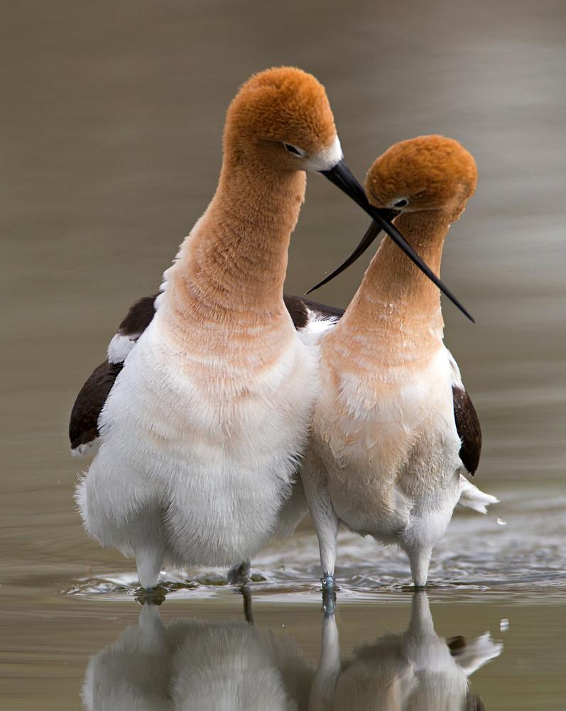 Love crossing