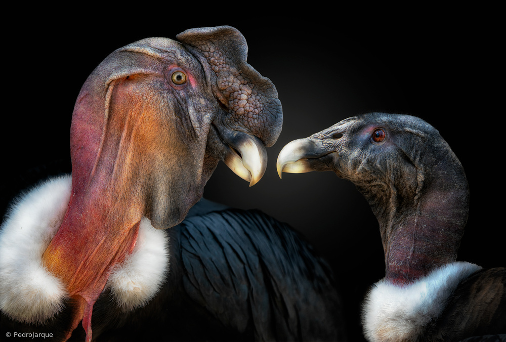 Mr. and Mrs. Condor